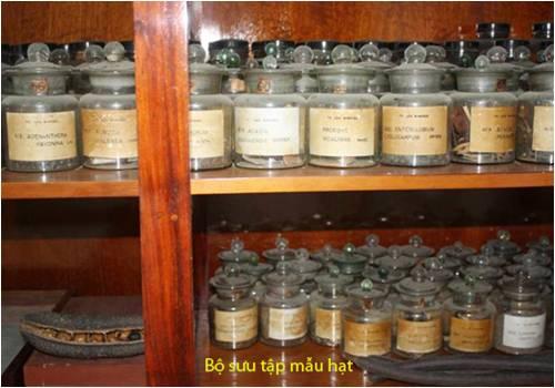 Bao tang thuc vat (4)